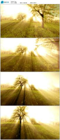唯美自然背景视频素材 mov