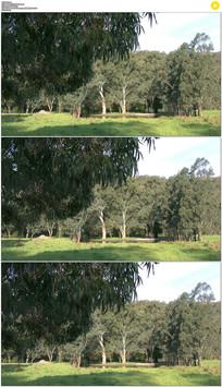 4K山区森林小湖泊实拍视频素材