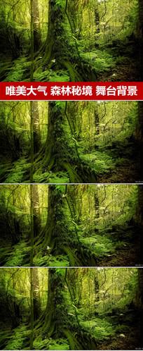 森林背景粒子光效蝴蝶飞舞视频