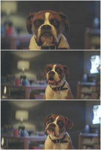 小狗狗生气不高兴想哭实拍视频