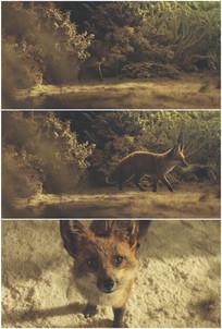 小狐狸小狗从草丛里钻出来跑出来视频