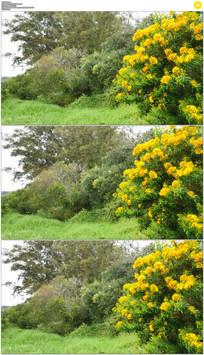 4K小岛上开黄花实拍视频素材