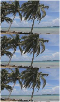 海边风景椰树实拍素材
