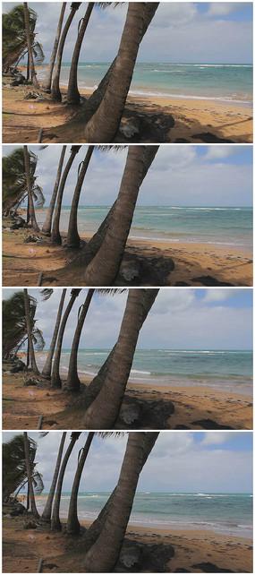 海鲜风景椰树群实拍素材