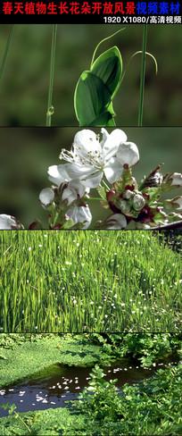 春天植物生长花朵盛开视频素材下载