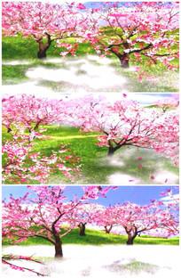桃花林世外桃源桃园桃花儿开放花朵视频