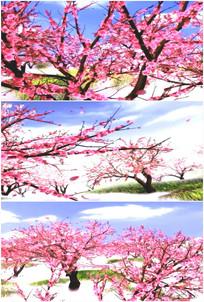 桃花林桃花源记桃花开放红花朵特写视频