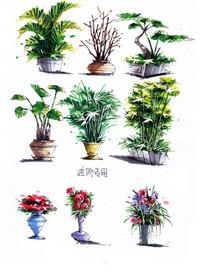 室内植物手绘