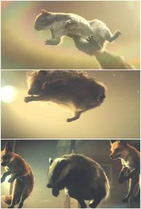 小狗獾松鼠狐狸刺猬小动物跳动跳高视频