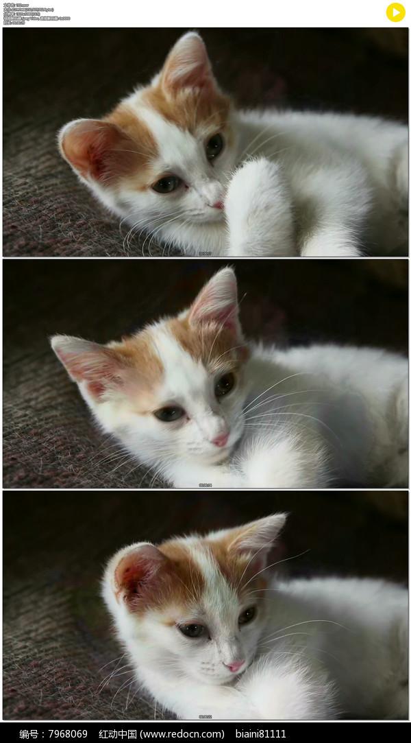 可爱小猫猫实拍视频素材