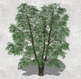 绿色大树SU