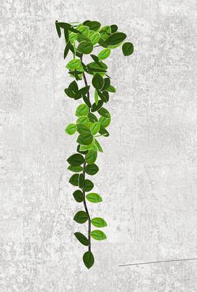 藤蔓植物SU模型 skp