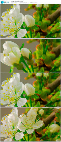 高清实拍春天花卉开放视频 mov