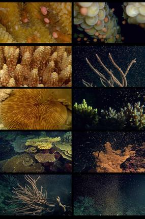 海底生物长视频