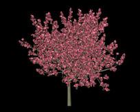 桃花树旋转视频无缝循环