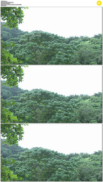 小鸟从树林飞出实拍视频素材