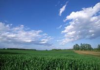 夏季农林景观