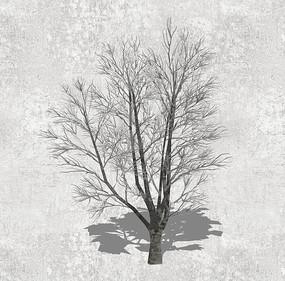 枯树SU模型