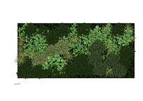 模纹图案植物墙