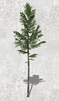 杉科植物模型