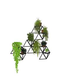 室内植物盆栽墙