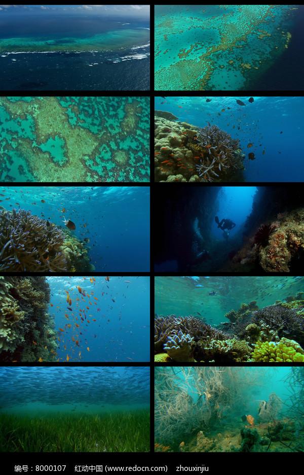 唯美海面海洋海底视频图片