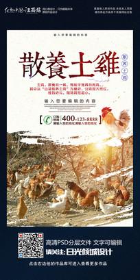 时尚大气散养土鸡宣传海报