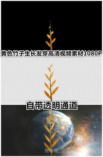 秋天黄色竹子竹笋生长发芽视频