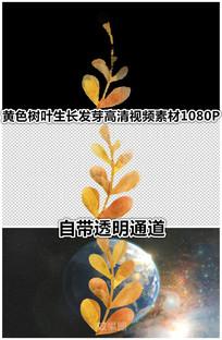 秋天树叶植物黄色叶子黄了视频