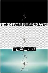 树枝枯树树干木头树杈特写视频