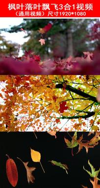 枫叶落叶飘飞视频