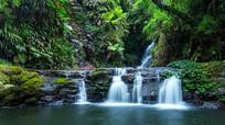 大自然热带雨林2K视频