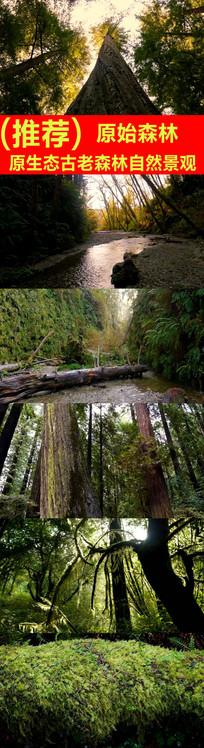 原始森林自然景观视频