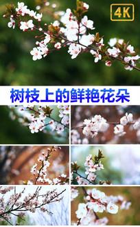 4K超高清春天花开时节