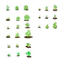 绿色蔬菜种植成长过程
