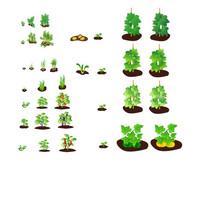 农场绿色蔬菜种植生长过程