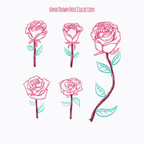 手绘玫瑰花插图矢量素材