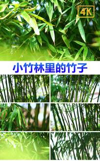 竹子竹叶4K超高清实拍素材 mp4