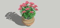 红菊花模型