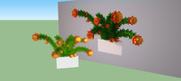 一种菊花3d模型