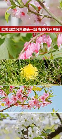 影视实拍镜头自然风光春暖花开花朵视频素材