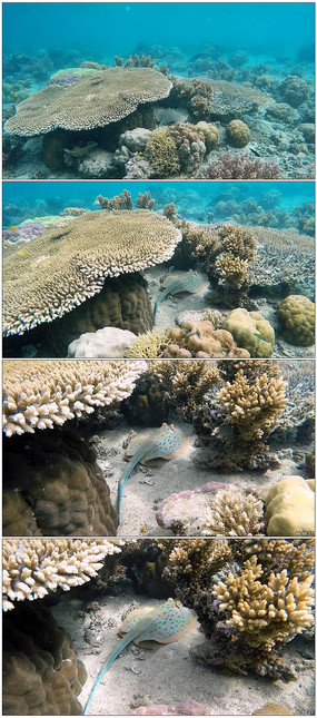 海底生物姿态风光高清视频实拍