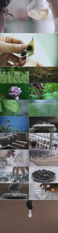农作物黑豆种植生长采摘制作加工视频素材