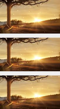 日落黄昏大树下时光如梭视频素材