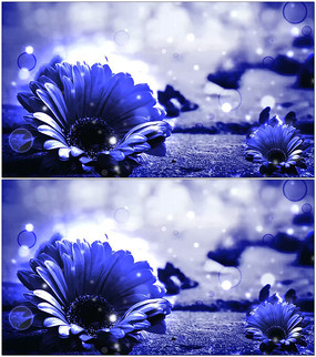 浪漫蓝色向日葵动态背景视频