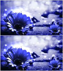 浪漫蓝色向日葵动态背景视频 mov