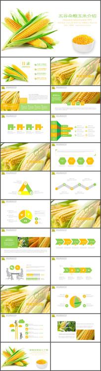 农产品玉米工作汇报PPT