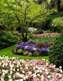 美丽生态花境 JPG