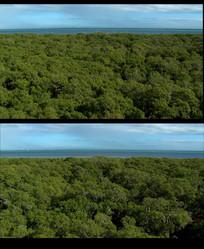 航拍海洋森林视频