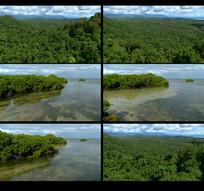 航拍森林河流视频